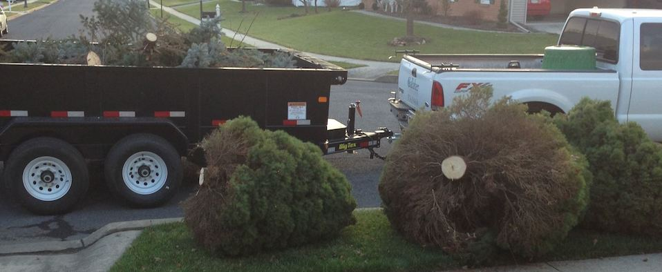 seasonal-clean-up-and-tree-removal-gallaher-landscaping